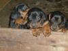 cuccioli12