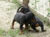 cuccioli3